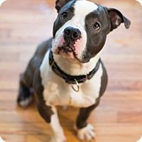 Adopt A Pet :: Frank - Framingham, MA