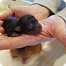 Adopt A Pet :: Prince Phillip