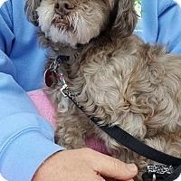 Adopt A Pet :: Maggie - Nicholasville, KY