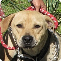 Adopt A Pet :: Brady - Providence, RI