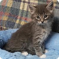 Adopt A Pet :: QUEEN - Dallas, TX