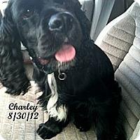 Adopt A Pet :: CHARLEY - Tacoma, WA