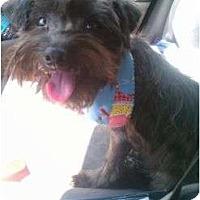 Adopt A Pet :: Teddy - Pembroke pInes, FL