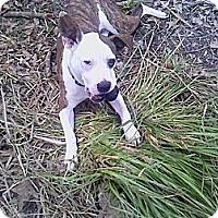 Adopt A Pet :: Lulu - Geismar, LA