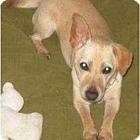 Adopt A Pet :: Cokey - Seattle, WA