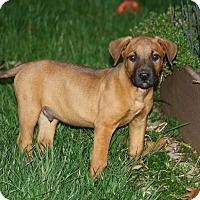 Adopt A Pet :: Scout - Homewood, AL