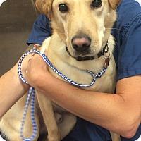 Adopt A Pet :: Mr. T - Cumming, GA