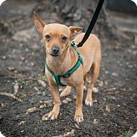 Adopt A Pet :: Nicole - New York, NY