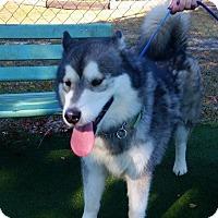 Adopt A Pet :: Malta - Clearwater, FL