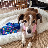 Adopt A Pet :: Lily - Mount Kisco, NY