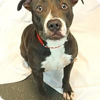 Adopt A Pet :: Sparkle - New Orleans, LA