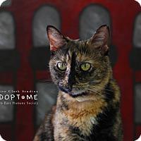 Adopt A Pet :: Randi - Edwardsville, IL