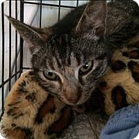 Adopt A Pet :: Jewel - Cocoa, FL