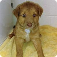 Adopt A Pet :: Milky Way - Burgaw, NC