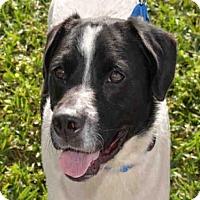 Adopt A Pet :: BOLT - West Palm Beach, FL