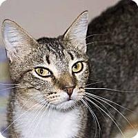 Adopt A Pet :: Bojangles - New Port Richey, FL
