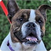 Adopt A Pet :: Petey*adoption pending* - Gilbert, AZ