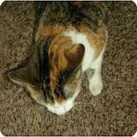 Adopt A Pet :: JoJo - Washington Terrace, UT