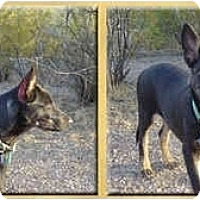Adopt A Pet :: Luca - Scottsdale, AZ