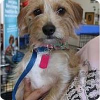 Adopt A Pet :: Libby - Arlington, TX