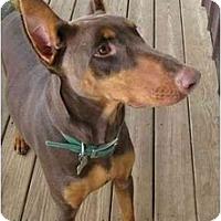 Adopt A Pet :: McKenzie--adopted! - New Richmond, OH