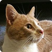 Adopt A Pet :: Max - calimesa, CA