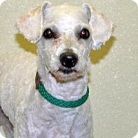 Adopt A Pet :: Noodle - Port Washington, NY