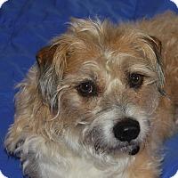 Adopt A Pet :: Scruffy - San Francisco, CA