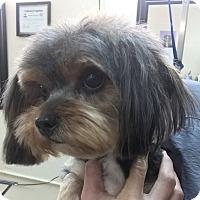 Adopt A Pet :: Hope - Orlando, FL
