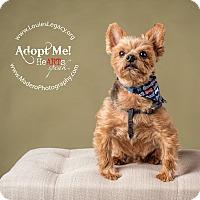 Adopt A Pet :: Luca - Staten Island, NY