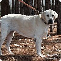 Adopt A Pet :: Molly - Minneola, FL
