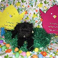 Adopt A Pet :: Wiggles - Orange County, CA