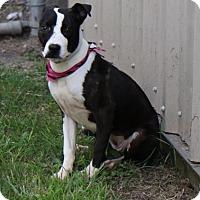 Adopt A Pet :: KYA - Houston, TX