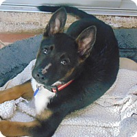 Adopt A Pet :: Bandit - Greeneville, TN