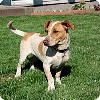 Adopt A Pet :: PEPPER JACK - Brattleboro, VT