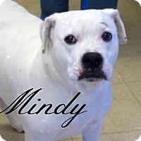 Adopt A Pet :: Mindy - Defiance, OH