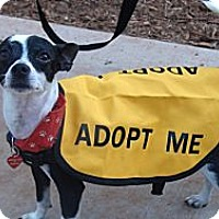 Adopt A Pet :: Raider - Grass Valley, CA