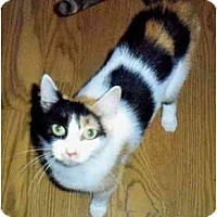 Adopt A Pet :: Mindy - Odenton, MD