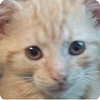 Adopt A Pet :: Prince Harry - Acme, PA