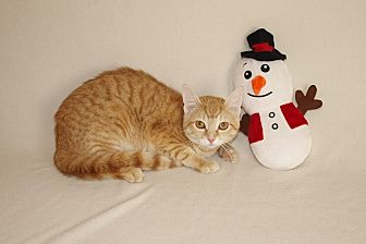 Domestic Shorthair Kitten for adoption in Jackson, Mississippi - Lillian