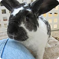 Adopt A Pet :: Nan - Newport, DE