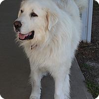 Adopt A Pet :: Kodiak ADOPTED - Bloomington, IL