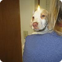Adopt A Pet :: puppy - Moreno Valley, CA