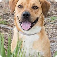 Adopt A Pet :: Hercules - Loxahatchee, FL