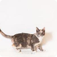 Adopt A Pet :: Daisy - Los Alamos, NM