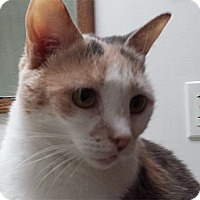 Adopt A Pet :: Lucy - Milford, OH