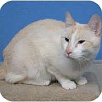 Adopt A Pet :: Atticus - Anchorage, AK