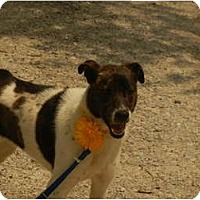 Adopt A Pet :: Dottie - Glastonbury, CT