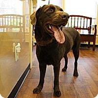 Adopt A Pet :: Dakota OS - Cumming, GA