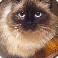 Adopt A Pet :: Annabelle - Nolensville, TN